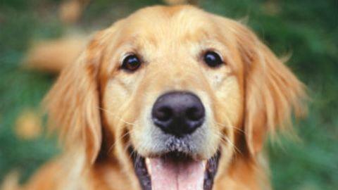 Mit üzen rólad a kutyád?