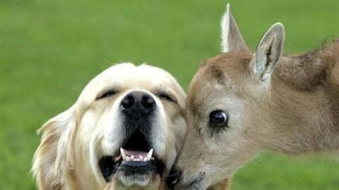 Bundás segítők: 15 állatbarát állat