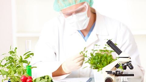 Itt a GMO-lista – mit ne vegyél a magyar boltokban?