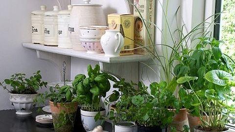 Így tartsd életben a cserepes fűszernövényeidet!