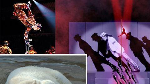 Mackófesztivál után Cirque du Soleil