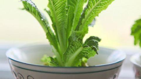 Kertészkedj a gyerekekkel! - Növeszd újra a salátát!