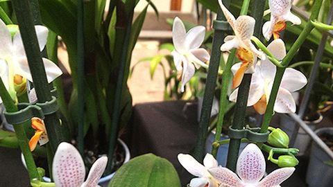 A dzsungelben sincsenek ilyen szép orchideák