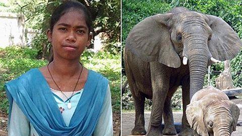 Az elefántokkal beszél egy kislány