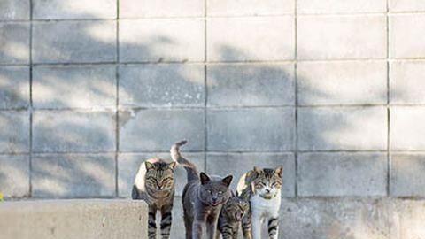 Ilyen az élet a macskamennyország szigetén