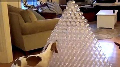 Napi cuki: így örül a kutya a karácsonyi ajándékának
