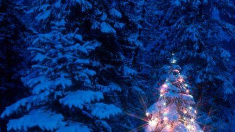 Hogyan tartsuk életben az élő karácsonyfát?