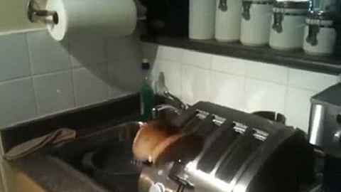 Ez a legbénább kenyérpirító