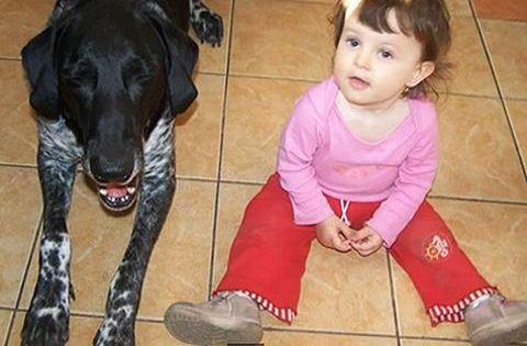 Tüneményes videó: kutya őrzi-védi a kisbabát