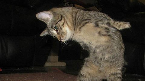Két lábbal is teljes életet él a tündéri cica