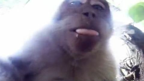 Fényképezőgépet lopott a majom, majd önfotózott egyet – videó!
