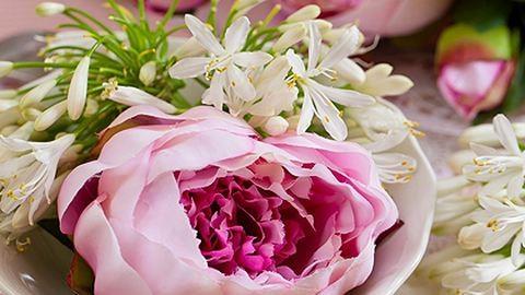 Mit üzennek a virágok? – 47 szépség jelentése
