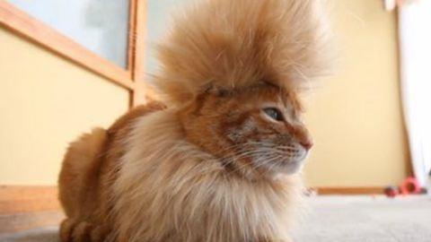 Cukiság: punkfrizurát kapott a macska – fotó!