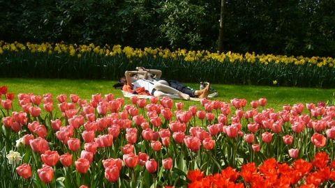 Tulipánország: varázslatos virágoskert Hollandiában