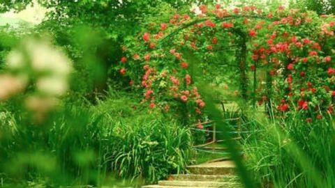 Monet híres kertje: tudta, mi kell a szemnek