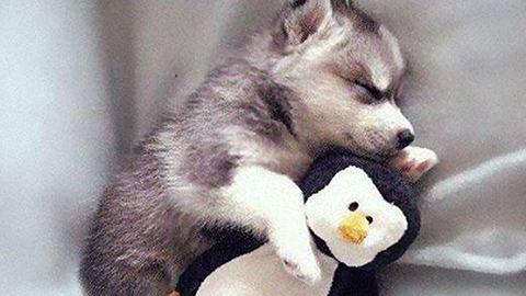 Cukiság: így alszanak az állatkölykök - fotók