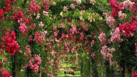 Leggyönyörűbb kertek álmodozáshoz