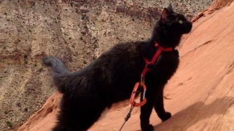 Örökbe fogadott macskájával mászik hegyet