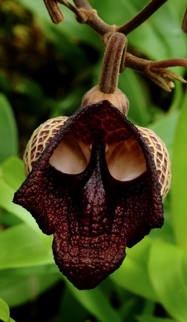 10 virág, ami teljesen másra hasonlít - bámulatos fotók