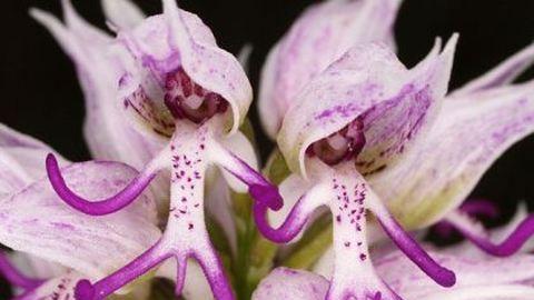 13 virág, ami teljesen másra hasonlít – bámulatos fotók