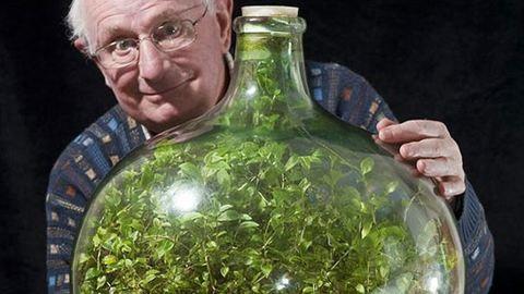 40 éve nem locsolták meg ezt a növényt, és él
