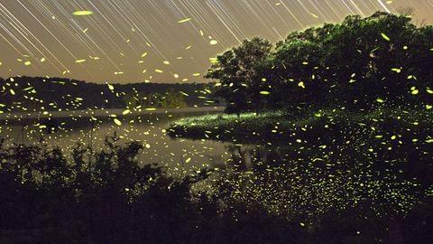 Pompás éjszakai fényjáték zajlik az erdőkben