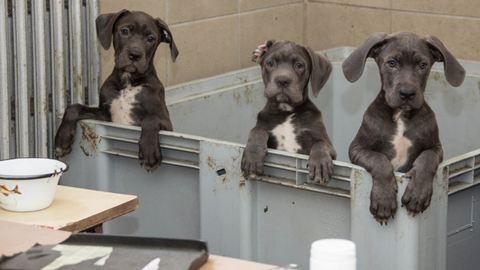 Állatkínzás! 40 éhező kiskutyát találtak Csepelen