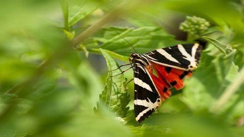 Csodás képek több ezer pillangóról