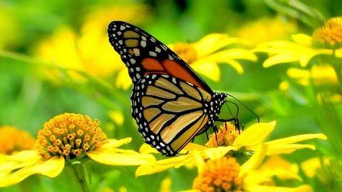 Zene elmélyüléshez: a pillangó dala
