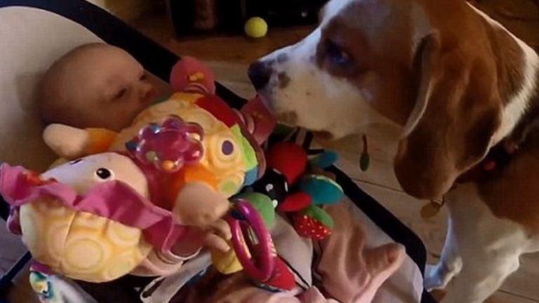 Tüneményes videó! Így kér bocsánatot a kutya a kisbabától