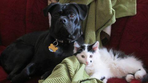 Egy kutya mentett meg egy újszülött kiscicát – fotók