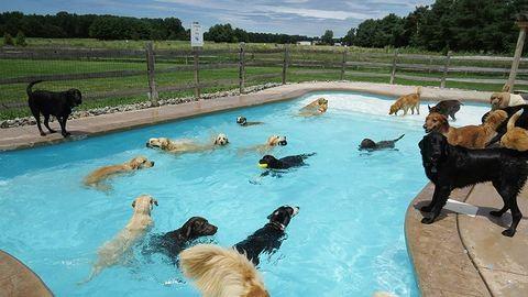 Úszómedencés buli kutyáknak: ilyet még nem láttunk