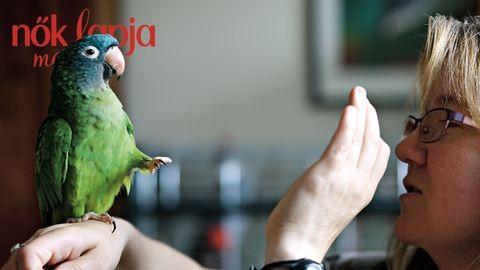 Mit csinál az állatpszichológus?