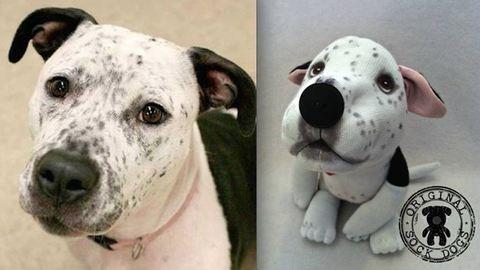 Zoknikutyák segítik a kóbor kutyákat – fotók