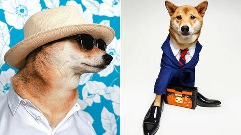 Férfi modellként dolgozik egy kutya