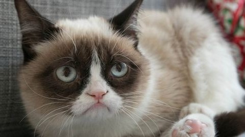 Híres macskák, akik vagyonokat keresnek gazdáiknak