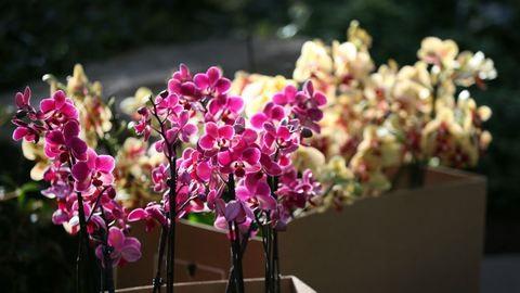 Eljött az orchideák ideje, így gondozd őket ősszel!