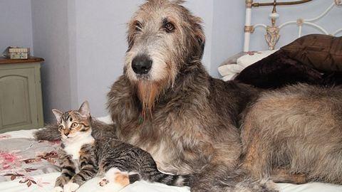 Kutyusnak hiszi magát az árva kiscica – tüneményes fotók