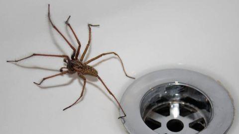 Megvált agyának egy darabjától a pókfóbiás férfi