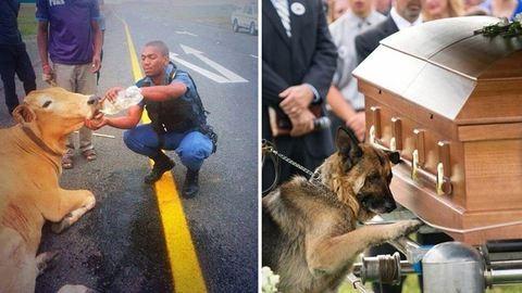 Szívmelengető hősiesség: akik egy kutyáért is feláldoznák az életüket