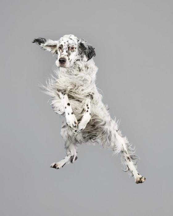 Repül a, repül a... kutya - galéria