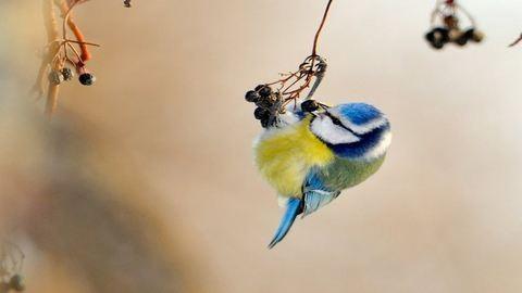 Készíts madáretetőt cserépalátétből!