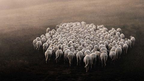 Gyönyörű fotókat készít a pásztorként élő férfi