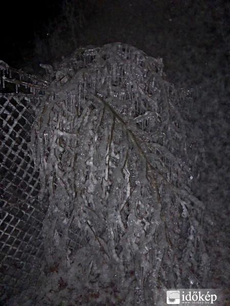 A Gerecsében megsemmisült az erdő - megdöbbentő fotók