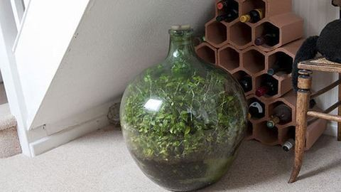 Nem kell locsolni, mégis zöldell az élő minikert