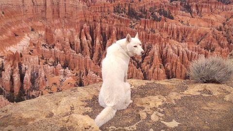 Lenyűgöző képeket készített kutyájáról egy fotós