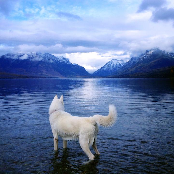 Csodás képeket készített kutyájáról egy fotós