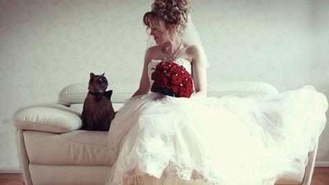 Házi kedvencek az esküvőn – cuki képek