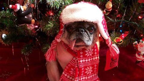 50 cuki állat, akiknél már dübörög a karácsony! – vicces fotók