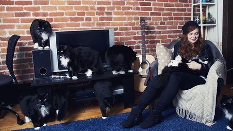 Vicces fotók: ilyen az, amikor a macskák átveszik az irányítást az életedben